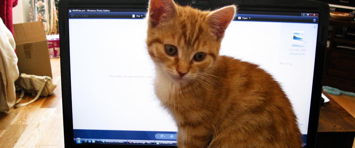 pc-cat2